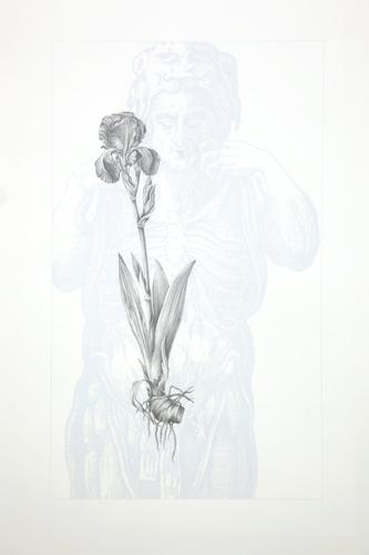 sandy cloupeau -dessin-iris
