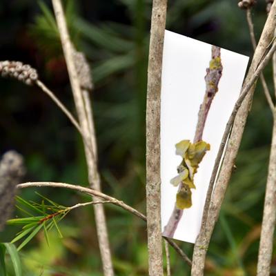 anne-france abillon - jardin 06