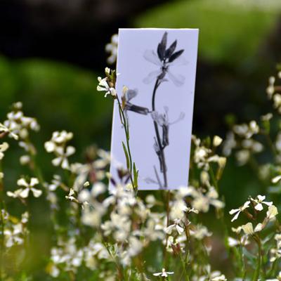 anne-france abillon - jardin 08